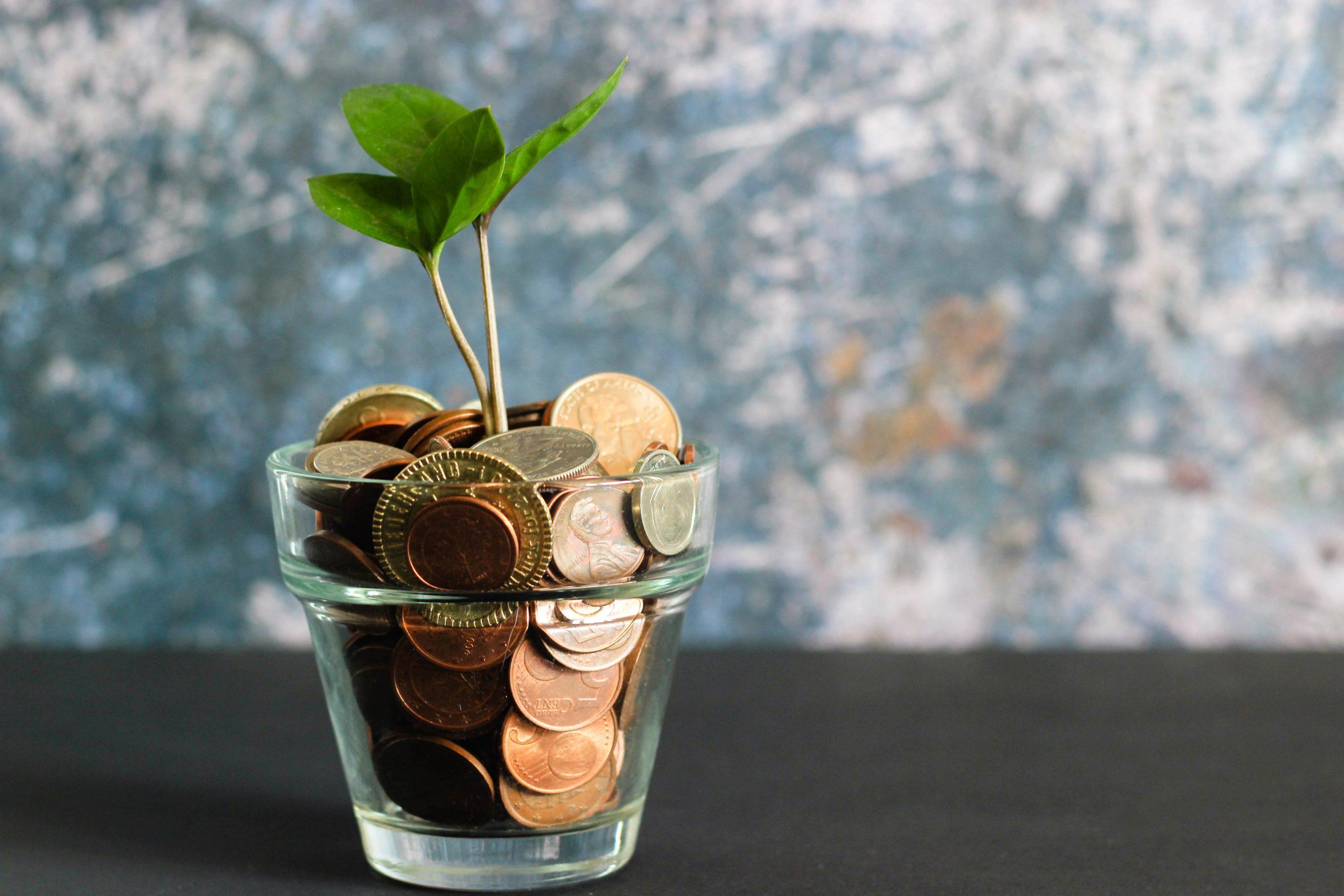 Financement Startup Jeune Pousse